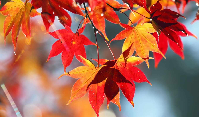 осень, природа, листья, картинка,