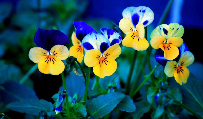 цветы, красивые,