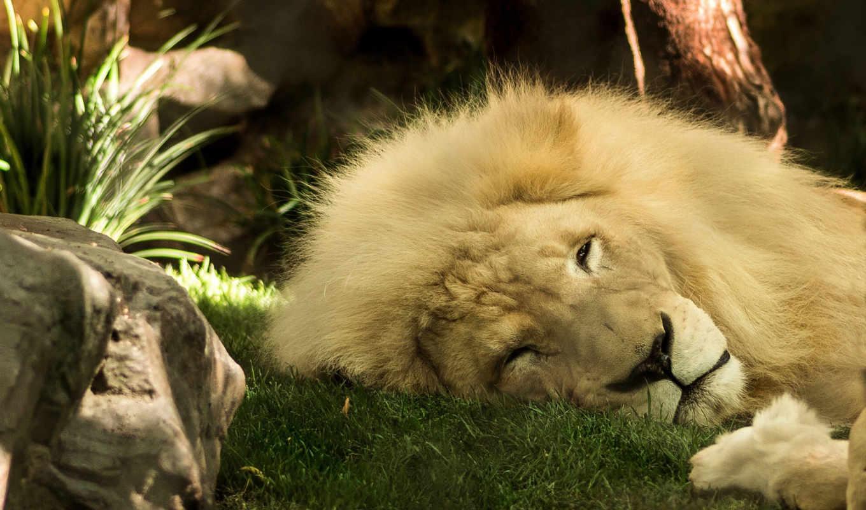 lion, samsung,