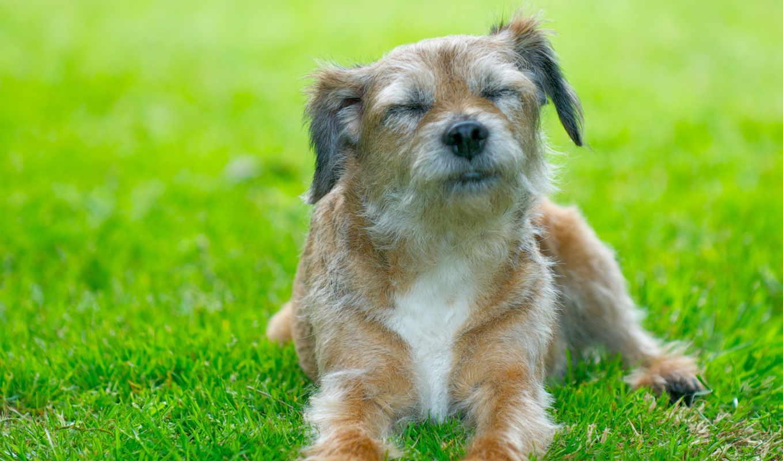 köpek, собака, desktop, facebook, resim, kass, flickr, tai, собаки, covers,