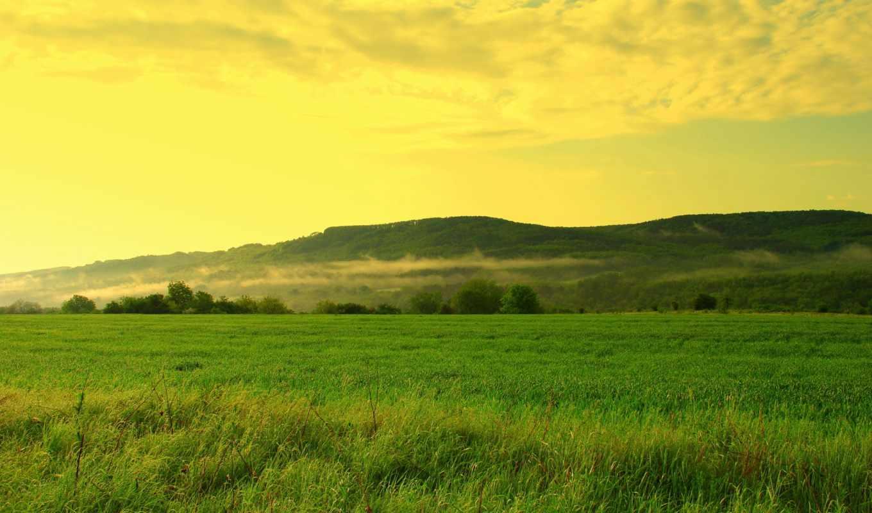 поле, трава, небо, холмы, trees, oblaka, дымка, травы, лес, газоны,