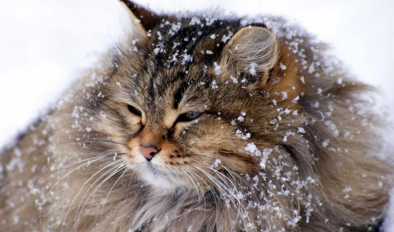 великан, зима, снег, кот, картинка, картинку,