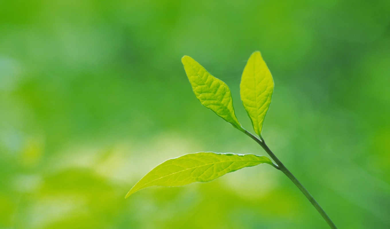 green, leaves, зеленые, bidibidi, galeri,