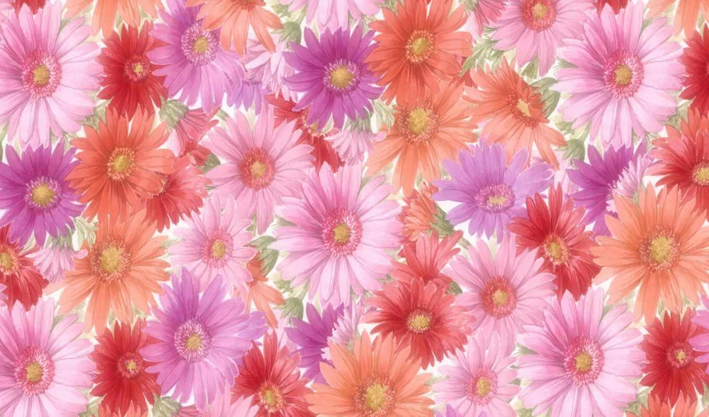 flowers, цветы, desktop, free,