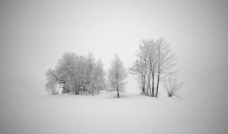 winter, природа, снег, иней,