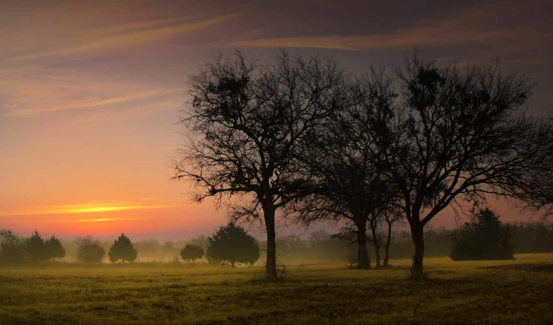 поле, природа, утро, рассвет, туман, landscape, sun, раннее, деревья,