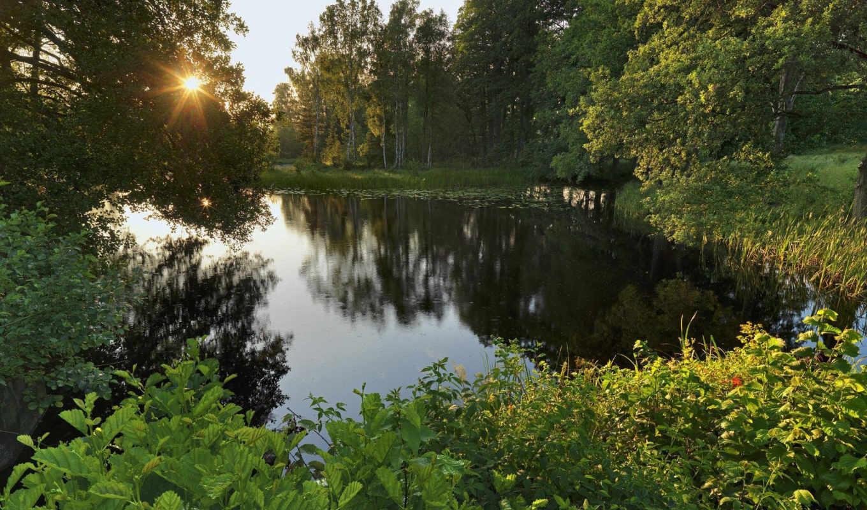 sweden, деревья, лес, озеро, svartа, nаrke, närke,