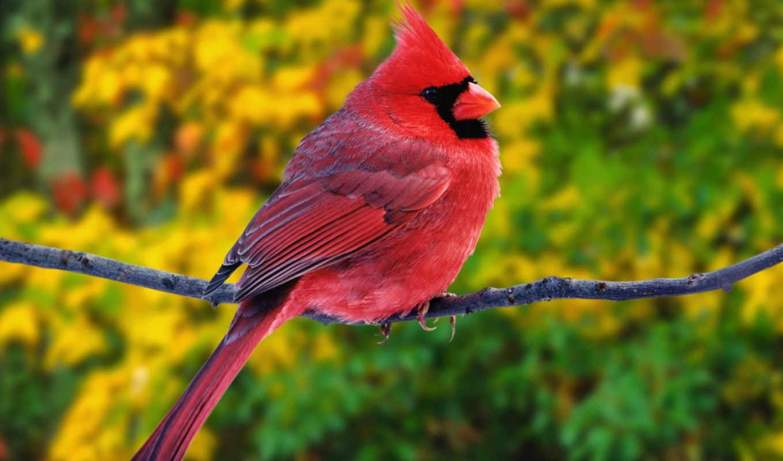 birds, angry, птицы, are,