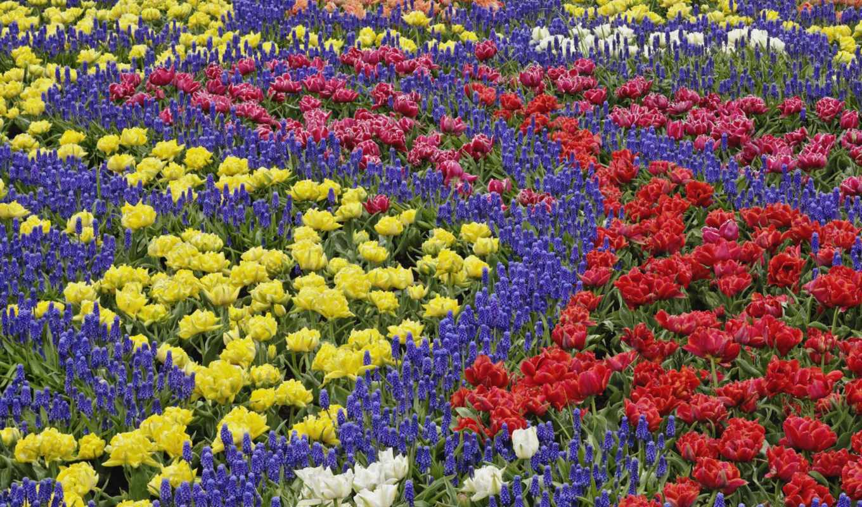 цветы, many, галереи, красивые,