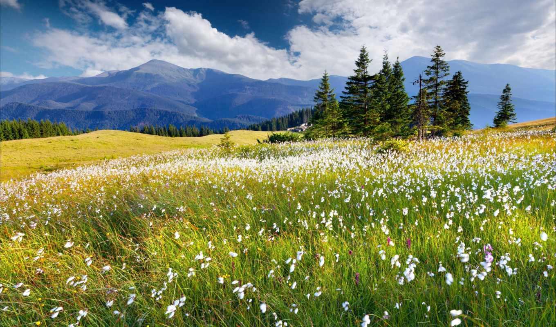 альпийские, луга, коллекция, картинок, рассвет, norwegian,