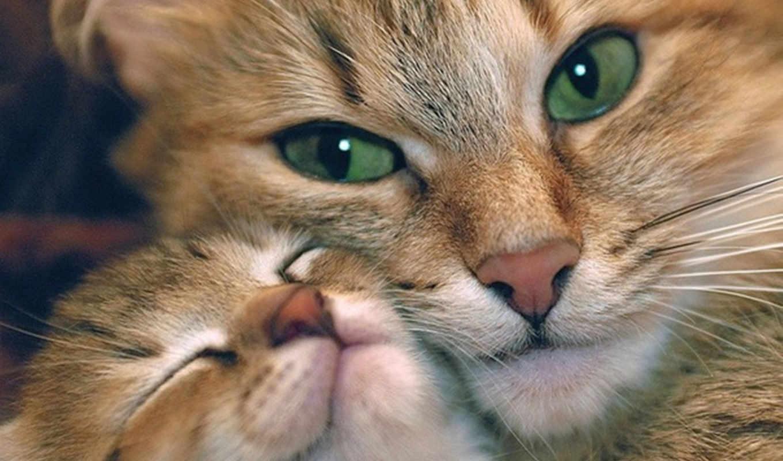 любов, кошки, ребенок, зеленые, glaza, нежность, mama,