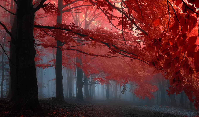 осень, лес, туман, деревья, картинка,