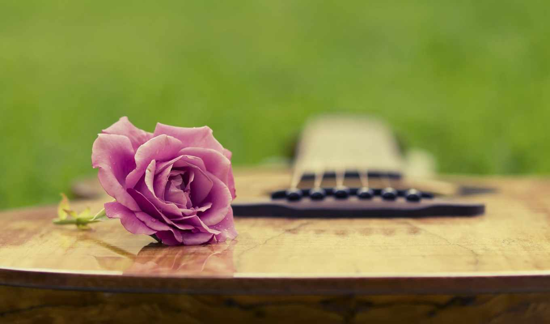 гитара, roza, полянка, трава, зелень, leto,