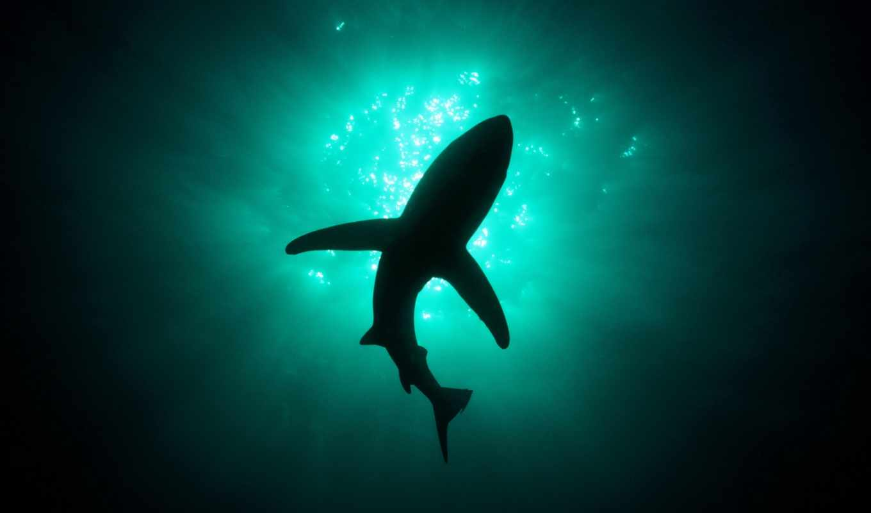 акула, силуэт, zhivotnye, море, акулы, волна, белая, underwater, animals,