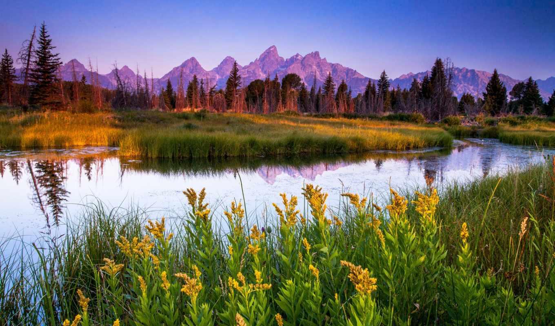 река, цветы, природа, трава, горы, лес, макро, тихая,
