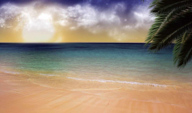 пляж, песчаный, пальмы, branch,