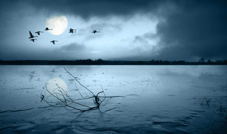 широкоформатные, луна, branch, грусть, настроения, птицы,