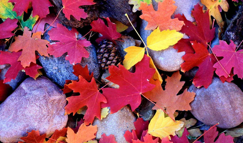 осень, клен, листья, камни, разноцветные,