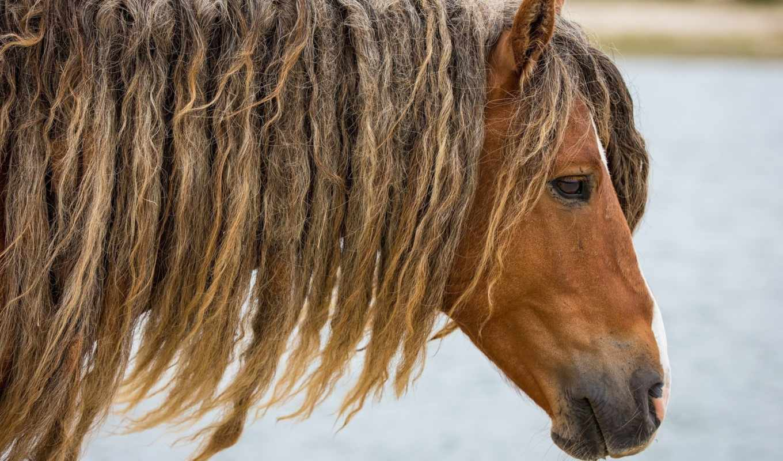 морда, лошадь, profile, лошади, животные,