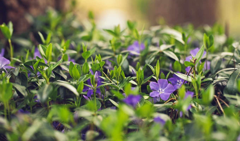 цветы, summer, природа,