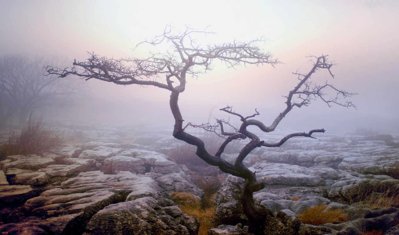 дерево, одинокое, туман, засохшее, кусты, природа, осень, деревя, вася, сирени,