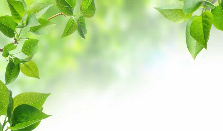 весна, зелень, ветки, листья, картинка,