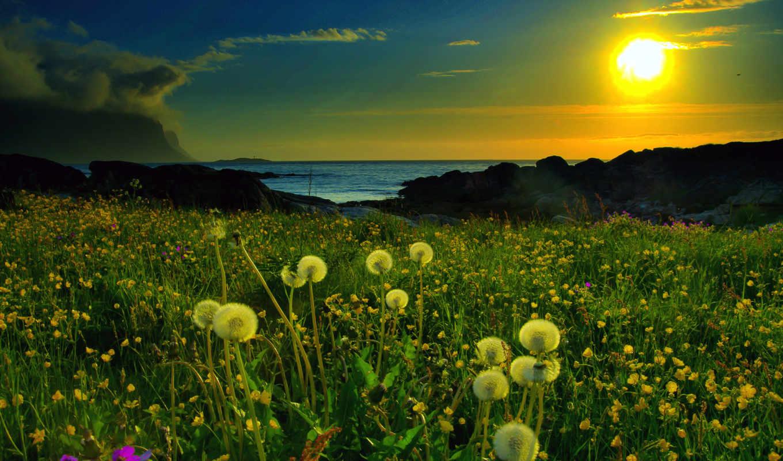 одуванчики, природа, поляна, закат, картинка, озеро, download, поле, new, ipad, desktop, рассвет, картинку,