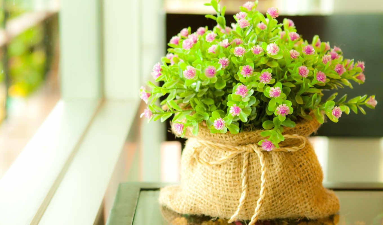 цветы, комнатные, растительность, куклы, травы, только,