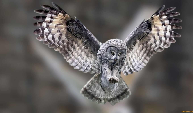сова, совы, сов, полете, продолжительность, views, полет, фактов, когти, интересных,