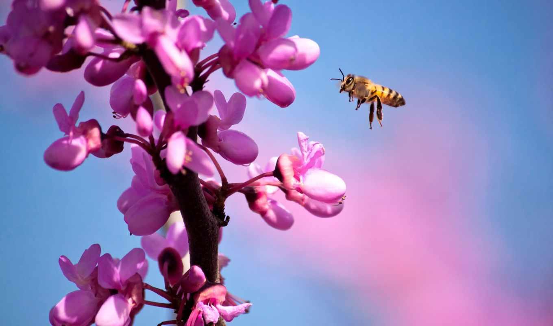 весна, branch, mes, cvety, primavera, abril, пчелка