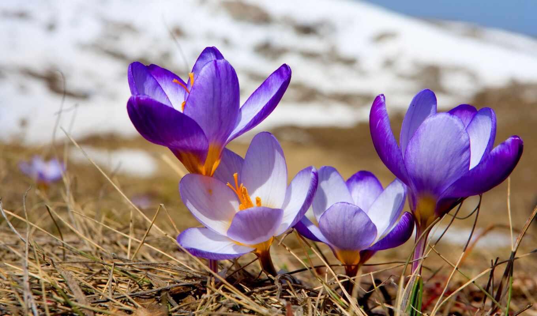 первоцвет, тв, цветы, kuzbass, april, москва, title, весна, travel, src, guide