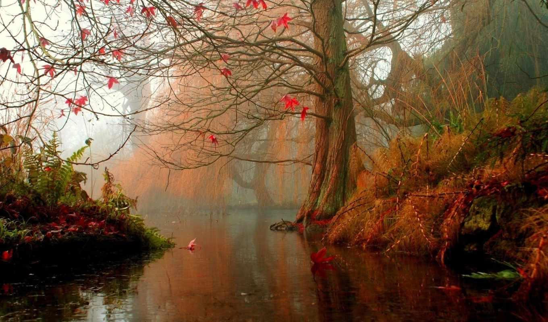 осень, water, дерево, листья,