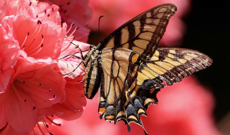 высоком, бабочка, разрешений, качестве, desktop,
