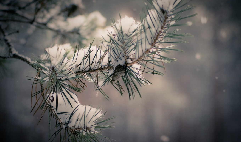 дерево, снег, winter, графика, branch,
