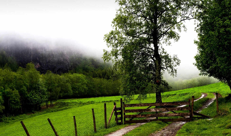 doğa, duvar, manzara, kağıtları, kağıdı, arka, manzarası, plan, indir, masaüstü, ağaçlar,