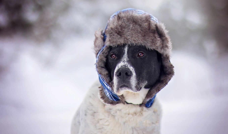 собака, друг, шляпа, new, дерево, год