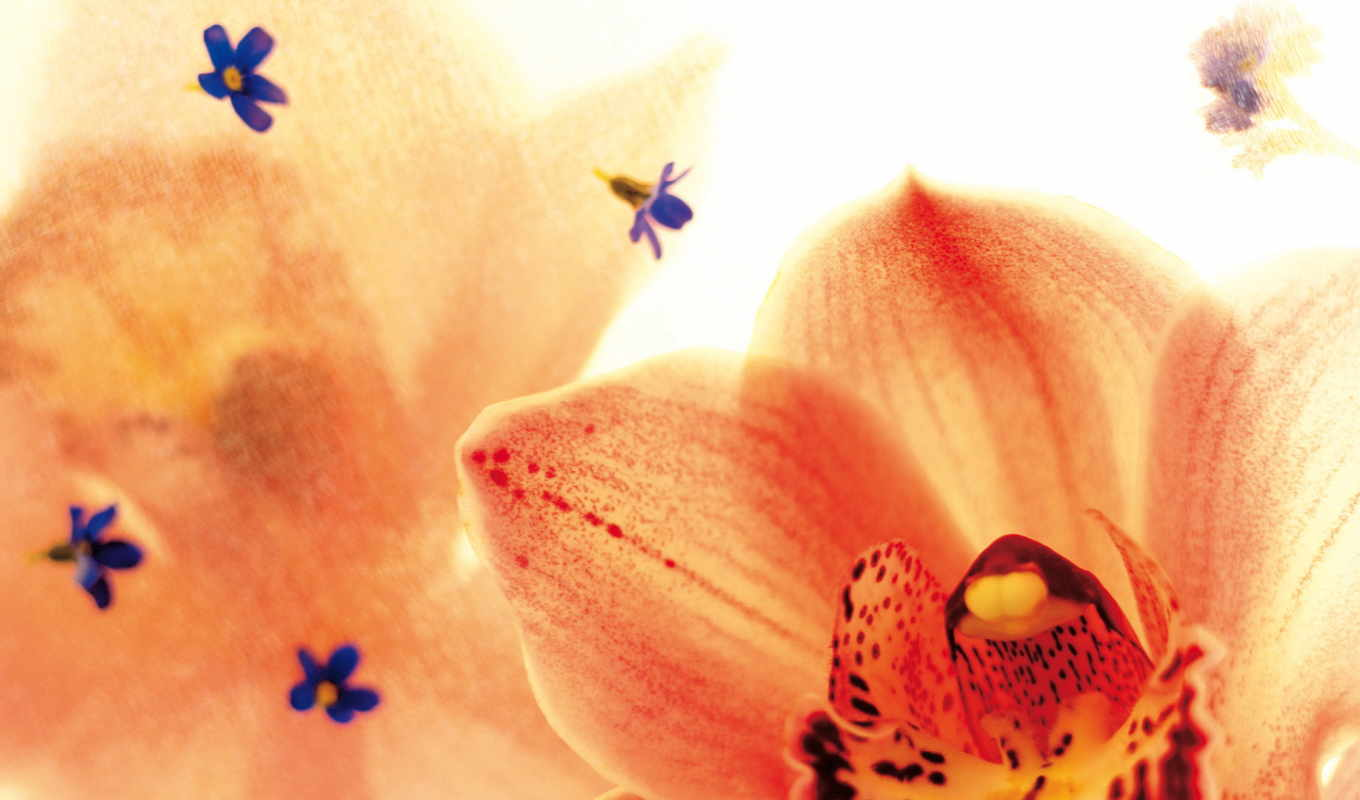 flowers, wallpaper, september, full, tiger, orchids, exotic, download, and, view,