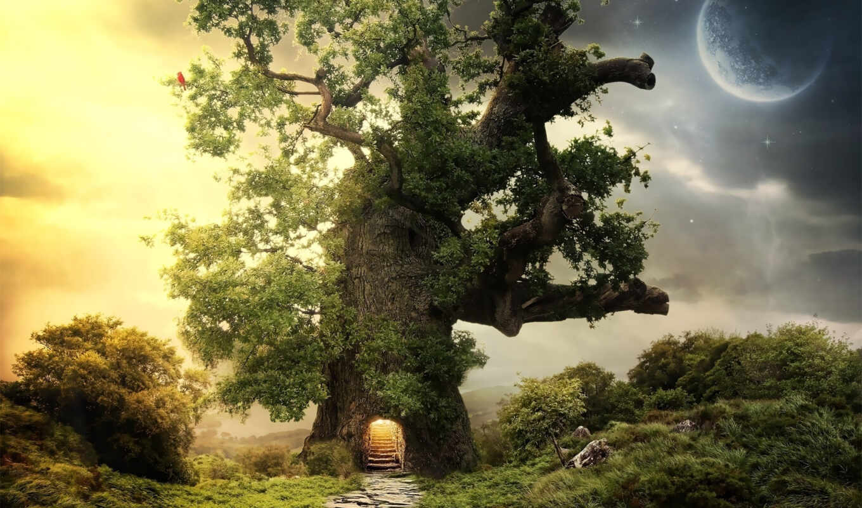 обои, дуб, дерево, планета, фото, hd, регистрации,