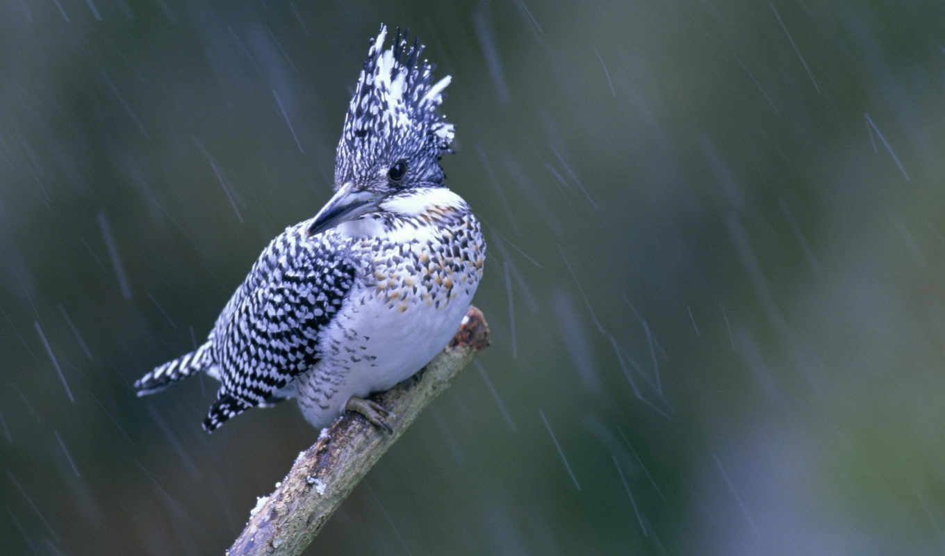 download, rain, you, resolutions, bird, birds,