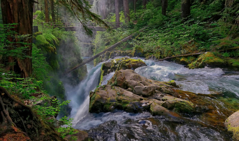 лес, река, поток, водопад,