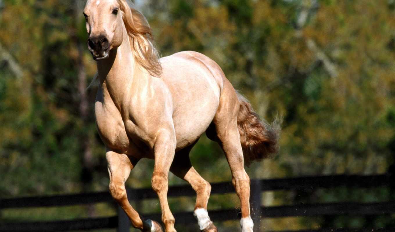 лошади, халк, бесплатные, спортивные, банка, лошадь, лошадей, фотографий,