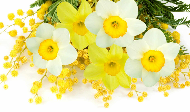 цветы, мимоза, мимозы, mimosa, flowers, delicate, весна, тюльпаны, нарциссы,