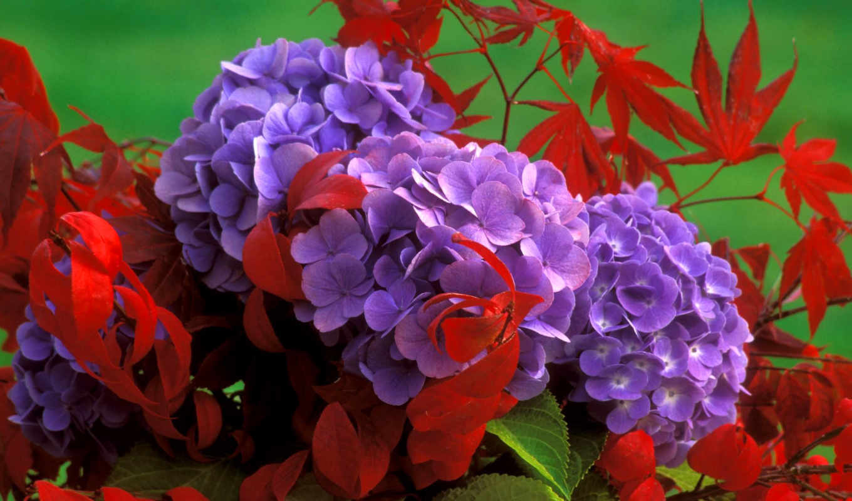 цветы, сиреневые, болоте, белые, фиолетовые, листьях, розовые, лиловыми, красных,