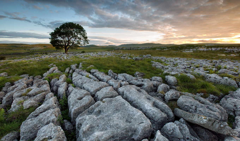 поле, дерево, камни, mанипалатён, photoshop, таторял, landscape,