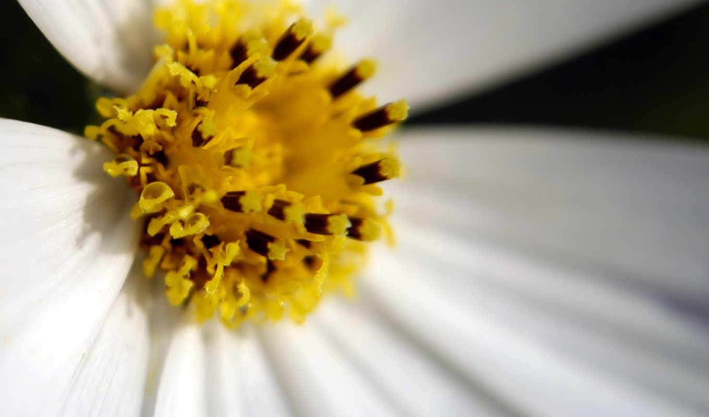 cvety, красивые, стихи, весной, звезд, разные,