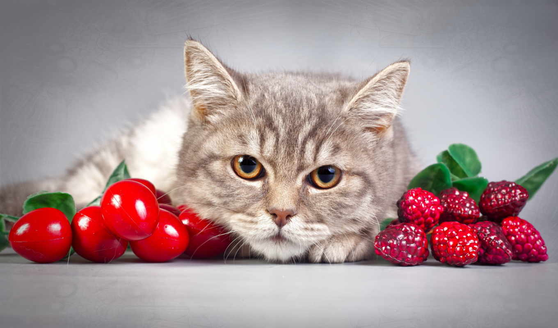 кошки, zhivotnye, коты, kot,