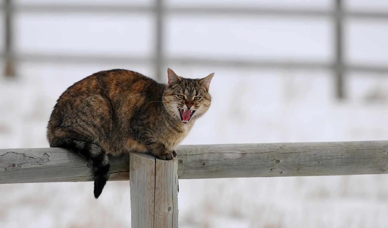 кот, забор, cats, fences, desktop, pinterest, animals,