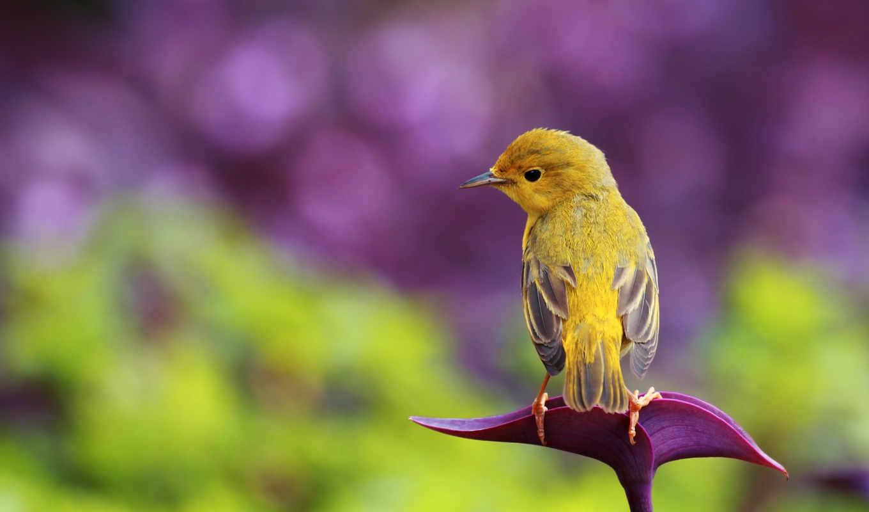 птичка, желтая, блики, картинку, картинка, птицы, мыши, кнопкой, hintergrundbilder, животные, понравившимися, поделиться, картинками, кликните, же, кномку, салатовую, левой, так,
