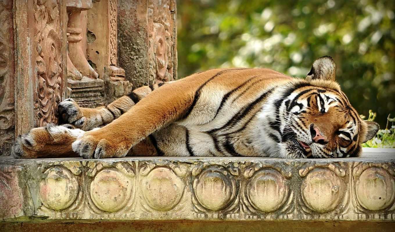 тигры, красивых, наборе,