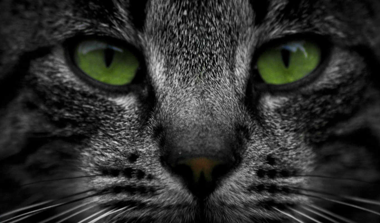 кот, striped, морда, взгляд, котенок,